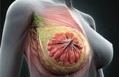 Когда обращаться к маммологу?