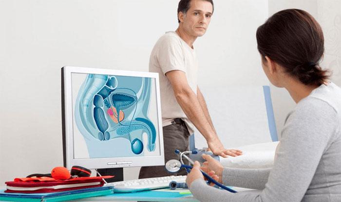 Как работает предстательная железа?